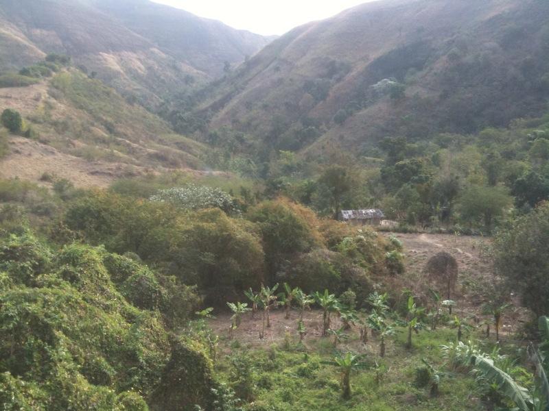 Shot of haiti